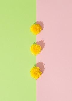 緑とピンクの背景の組み合わせに配置された黄色い花。女性の日のコンセプト。最小限のフラットレイ。