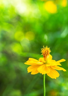 Yellow flower and soft blur green background
