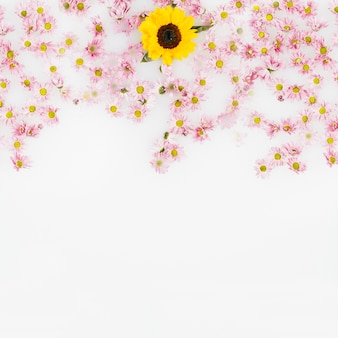 Yellow flower surrounded by pink blossom over white background