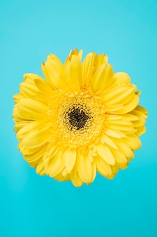 Yellow flower on turquoise background