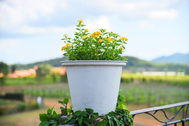 Yellow flower in white pot on outdoors and farmland