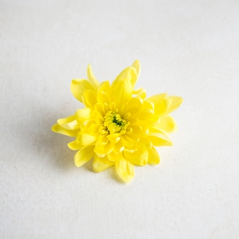 Yellow flower on white table