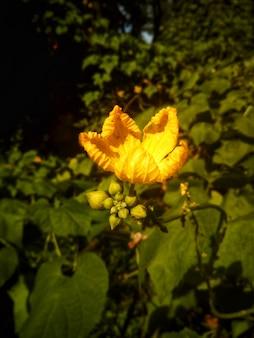새싹이 있는 노란 꽃 무료 사진
