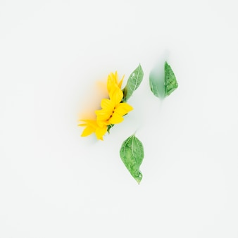 Yellow flower with leaves on white backdrop