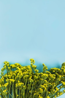 Yellow flowers against blue background