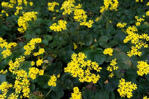 緑の葉に対して黄色の花
