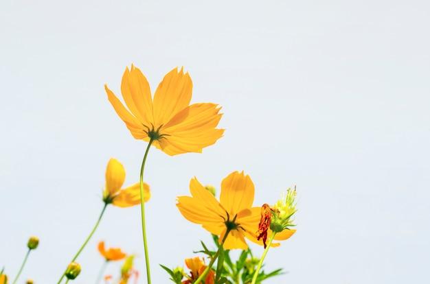 空の背景に黄色の花