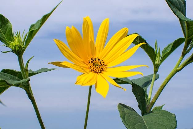 空を背景に黄色い花