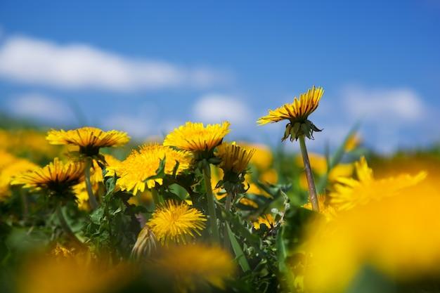 他の花の中で黄色の花