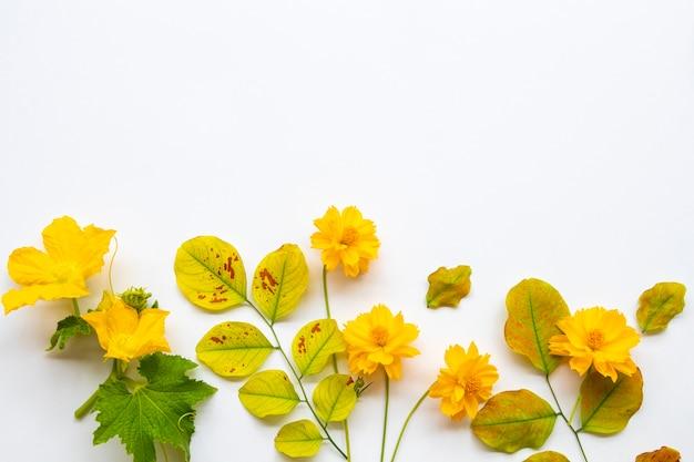 Желтые цветы и листья на белом фоне