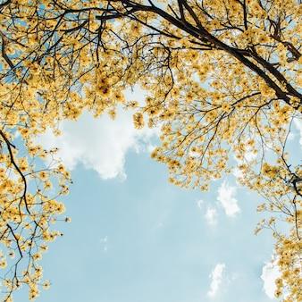 Yellow flowers bloom vintage style