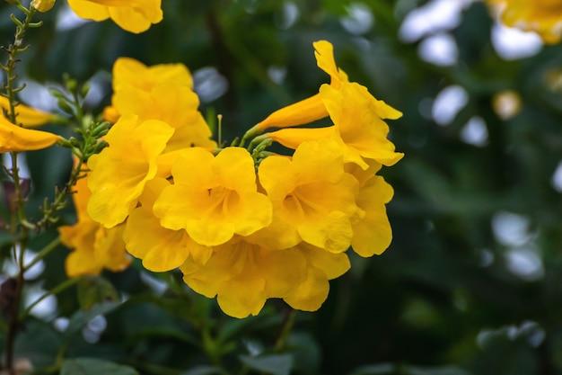 Желтые цветы распускаются весной, цветы цветут на зеленых листьях и ветвях деревьев на фоне неба