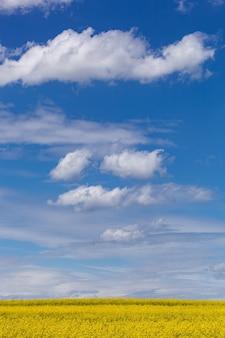 푸른 하늘 풍경이 있는 노란 꽃밭