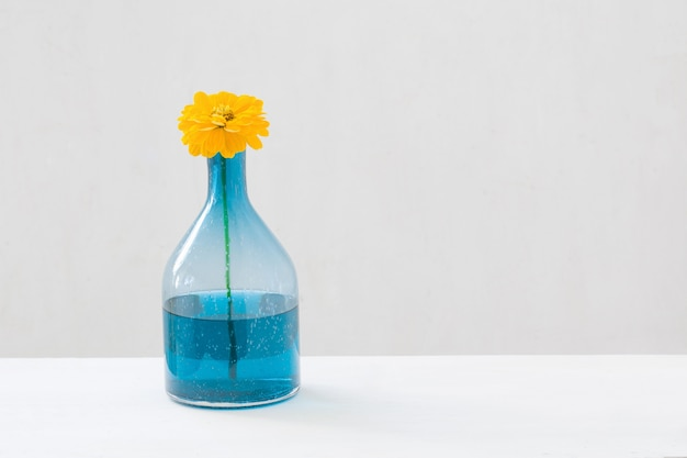 Yellow flowers in glass vase on white background
