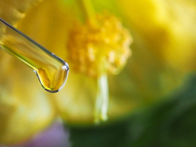 Yellow flowers and glass vial with essential oil.