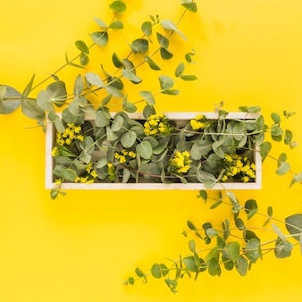 Yellow flowers and green leaves on wooden tray against yellow background