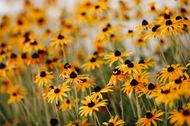 Желтые цветы в крупном плане клумбы. фото высокого качества