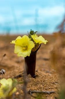 모래에 작은 꽃병에 노란 꽃
