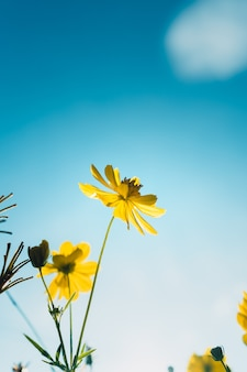 朝の黄色い花夏