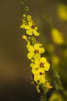 自然の中で黄色い花