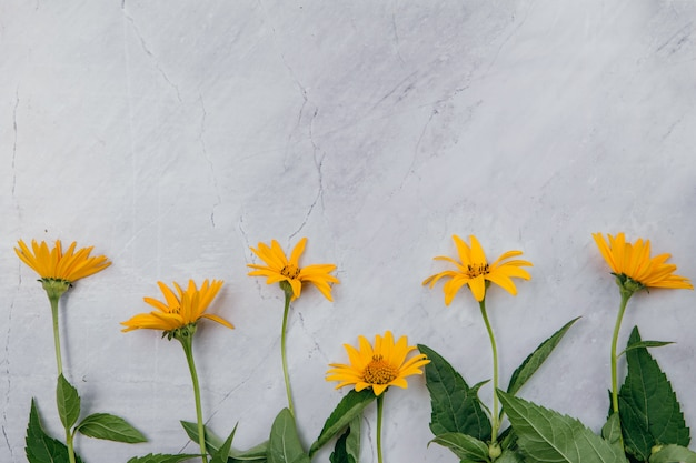 Yellow flowers on a marble background