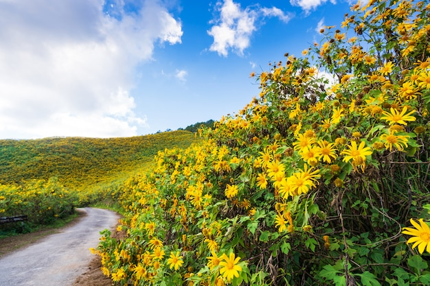 Yellow flowers on the mountain