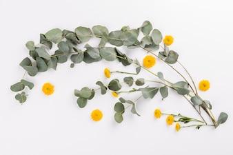 Yellow flowers near twigs