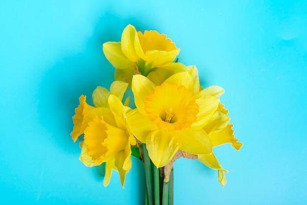 파란색 배경 휴가 개념 평면에 수 선화의 노란 꽃 누워