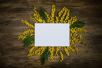 Yellow flowers of mimosa decorated in the sun with a postcard on a wooden background