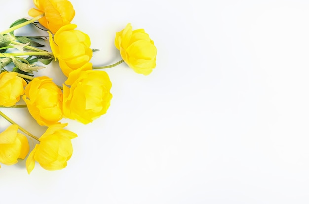 Желтые цветы на белом фоне, с копией пространства