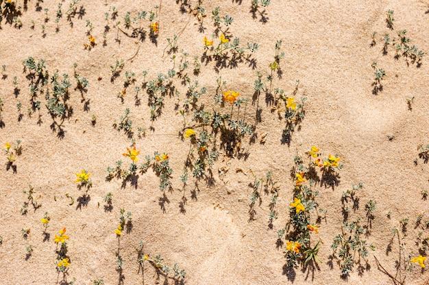 ビーチで黄色い花