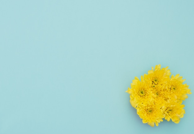 青い背景に黄色い花。母の日、春のコンセプト。