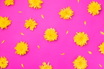Yellow flowers on magenta background