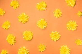 Yellow flowers on orange
