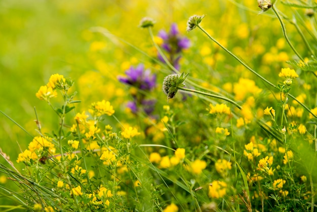晴れた夏の日に畑に黄色い花