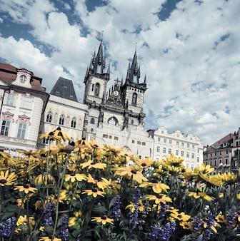 Желтые цветы на главной площади в праге
