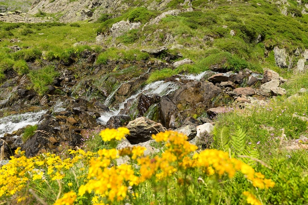 Yellow flowers and small waterfall in mountains