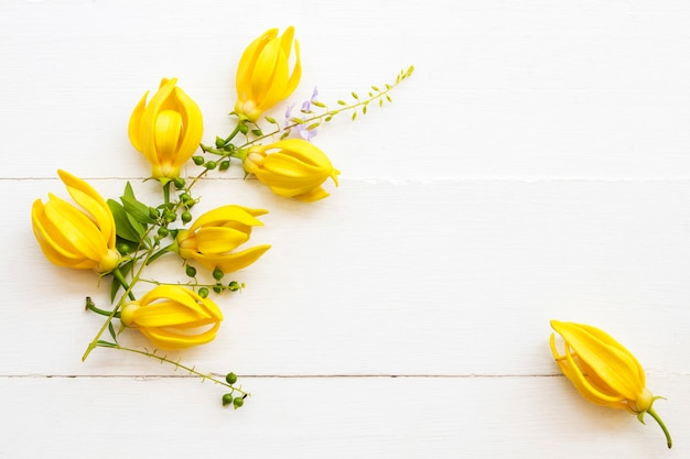 Yellow flowers on white paper