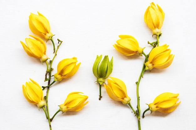 黄色い花イランイランアジアの地元の植物相