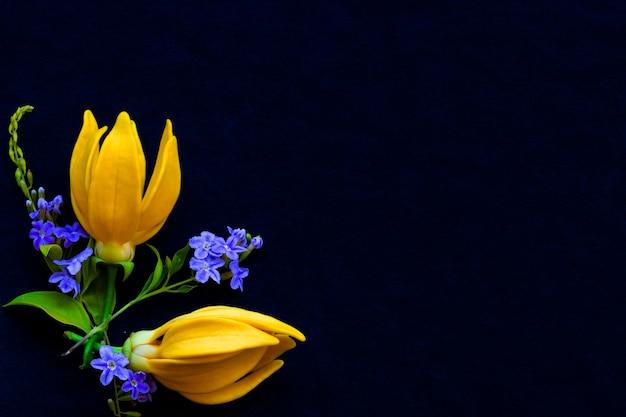 背景黒に黄色い花イランイラン