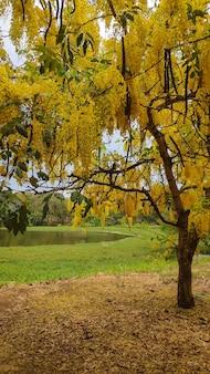 A yellow foliage tree beside a beautiful lake.