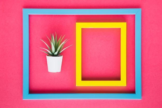 Yellow frame next to decorative plant