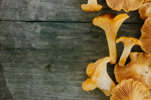Yellow fresh chanterelle mushrooms on a wooden gray surface.