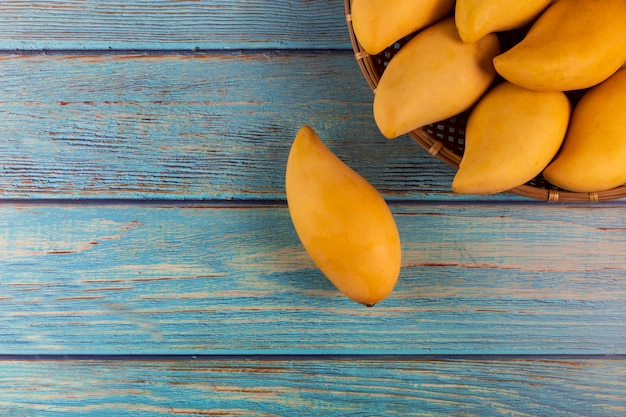 Yellow fresh mangos 0n blue wood table. mango tropical fruit. mangos