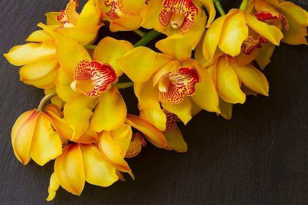 黄色の新鮮な蘭の花は黒い背景に茎