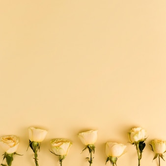 Yellow fresh roses with copy space