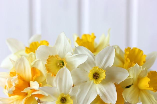 Желтые садовые нарциссы