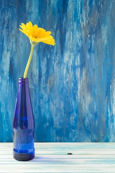 Yellow gerbera flower in blue bottle on wooden table against painted wall