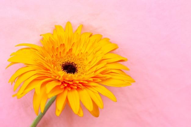 黄色いガーベラの花