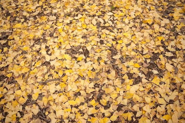 代々木公園の黄色いイチョウの木。